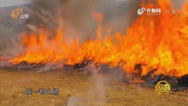 观察:防火大演练 林场春点兵
