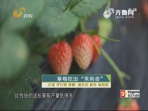 """草莓去吃出""""茉莉香"""""""