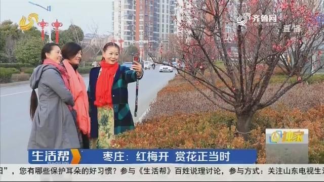 枣庄:红梅开 赏花正当时