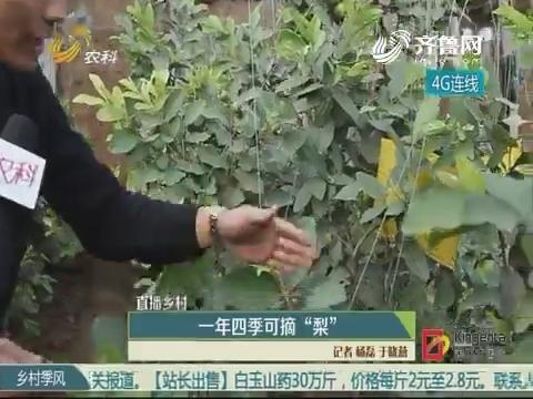 """【直播墟落】一年四序可摘""""梨"""""""