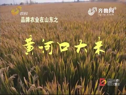 品牌农业在山东之黄河口大米