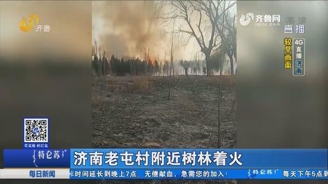 【4G直播】济南老屯村附近树林着火