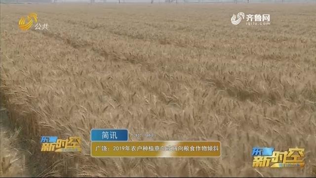 广饶:2019农户种植意向或将向粮食作物倾斜