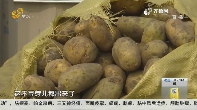 莱西:春播种土豆 电突然被掐了?