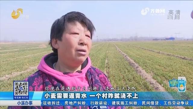 齐河:小麦必要返青水 一个村咋就浇不上