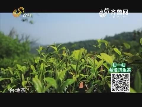 20190311《中国原产递》:普洱生茶