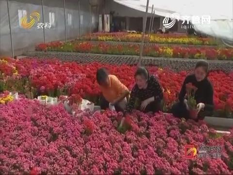 【直播乡村】化零为整 这个花卉产业园不简单