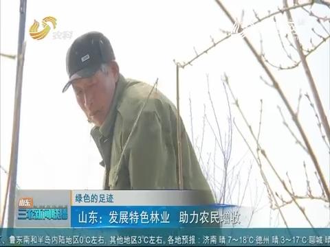 【绿色的足迹】山东:发展特色林业 助力农民增收