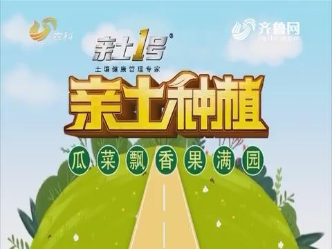 2019年3月13日《亲土莳植·瓜菜飘香果满园》完备版