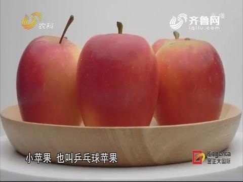 苹果财产生长要走差别化门路