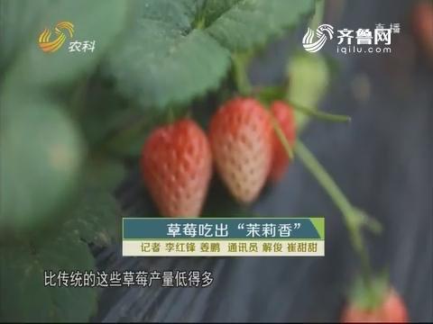 """草莓吃出""""茉莉香"""""""