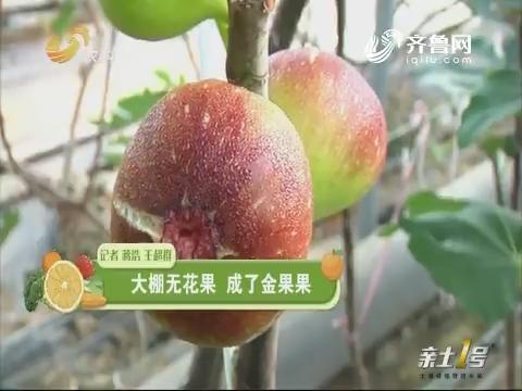 【莳植达人】大棚无花果 成了金果果
