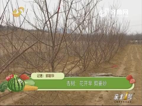 【农技一点通】杏树:花开早 剪要妙