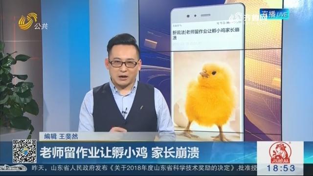 【新说法】老师留作业让孵小鸡 家长崩溃