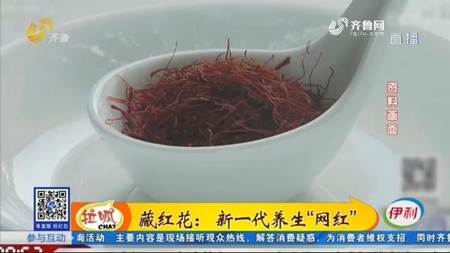 """藏红花:新一代养生""""网红"""""""