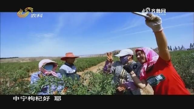 20190315《中国原产递》:宁夏枸杞