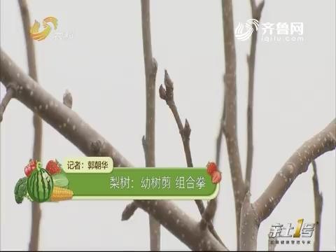 【农技一点通】梨树:幼树剪 组合拳