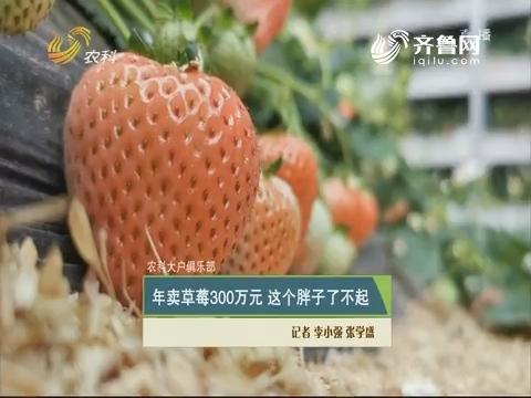 【农科大户俱乐部】年卖草莓300万 这个瘦子了不得