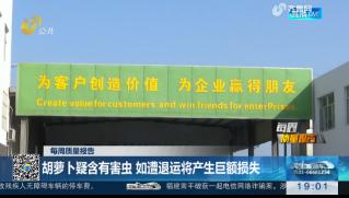 【每周质量报告】潍坊:胡萝卜疑含有害虫 如遭退运将产生巨额损失