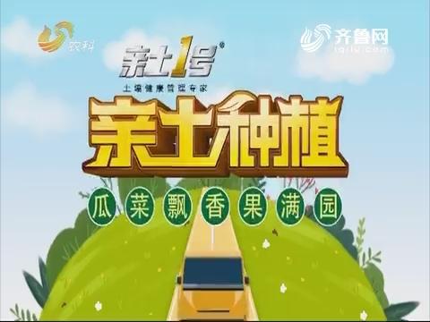 2019年3月18日《亲土莳植·瓜菜飘香果满园》完备版