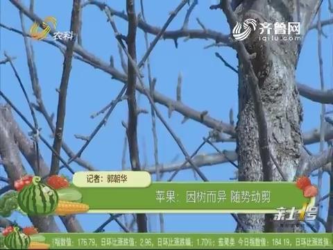 【农技一点通】苹果:因树而异 随势动剪