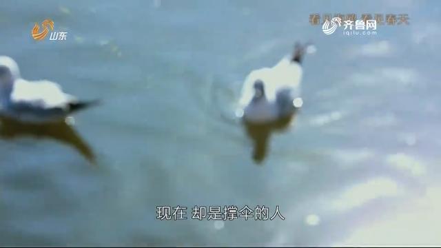 20190318《此时现在》:瞥见海鸥 瞥见春天