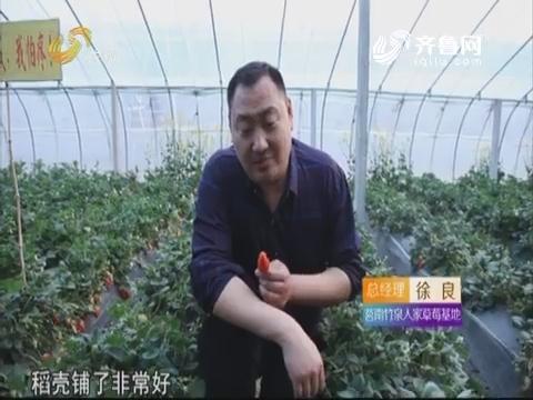 草莓园里铺稻壳