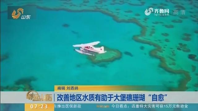 """改善地区水质有助于大堡礁珊瑚""""自愈"""""""