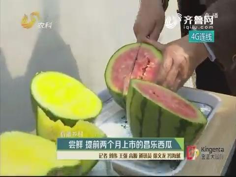 【直播乡村】尝鲜 提前两个月上市的昌乐西瓜