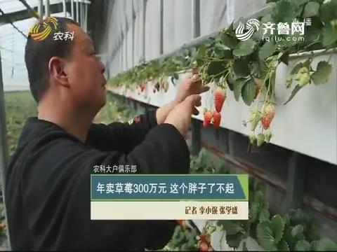 【农科大户俱乐部】年卖草莓300万元 这个瘦子了不得