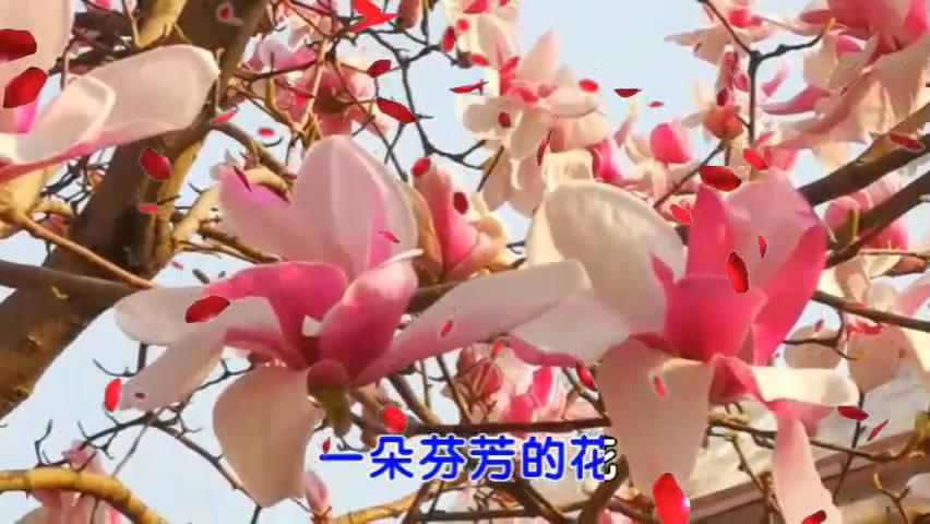 音画视频:《姹紫嫣红春满园》