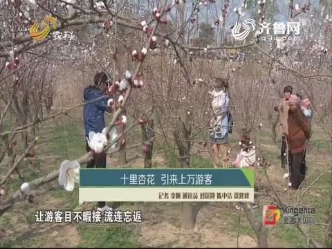 十里杏花 引来上万游客