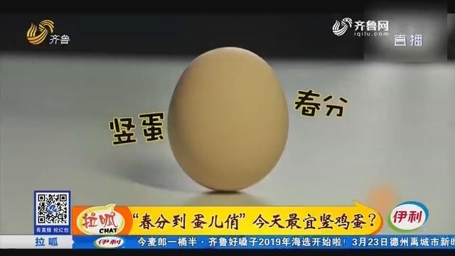 """""""春分到 蛋儿俏""""本日最宜竖鸡蛋?"""