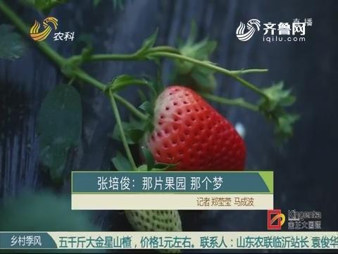 张培俊:那片果园 那个梦