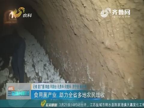 【走齐鲁 看样板】食用菌产业 助力全省多地农民增收