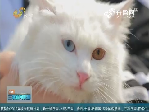 【文明养宠】宠物办事进社区 临清狮猫抢眼球