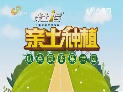 2019年3月25日《亲土莳植·瓜菜飘香果满园》完备版