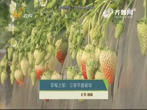 【小螺号·农技服务直通车】草莓之旅:立架平面栽培