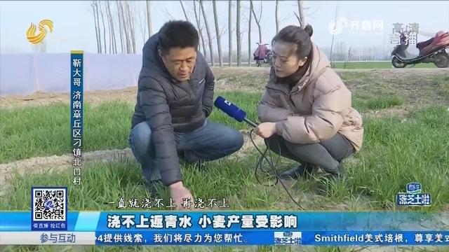 章丘:浇不上返青水 小麦产量受影响