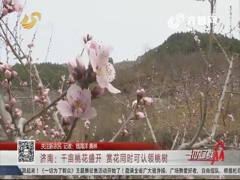 【关注新农民】济南:千亩桃花盛开 赏花同时可认领桃树
