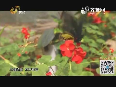 20190329《旅养中国》:萤火虫之约