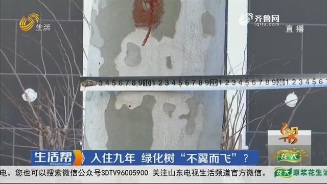 """潍坊:入住九年 绿化树""""不翼而飞""""?"""