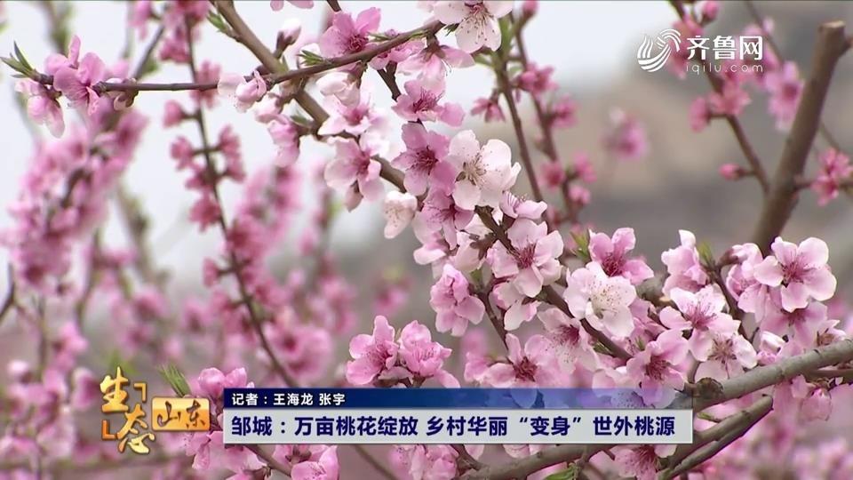 """邹城:万亩桃花绽放 乡村华丽""""变身""""世外桃源"""