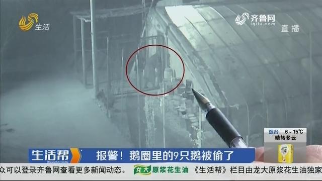 济宁:报警!鹅圈里的9只鹅被偷了