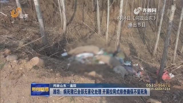 【问政山东·追踪】潍坊:病死猪已全部无害化处理 开展拉网式排查确保不留死角