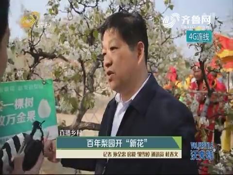 """【直播乡村】百年梨园开""""新花"""""""