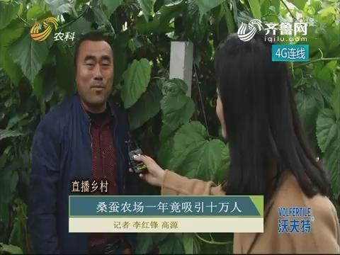 直播乡村:桑蚕农场一年竟吸引十万人