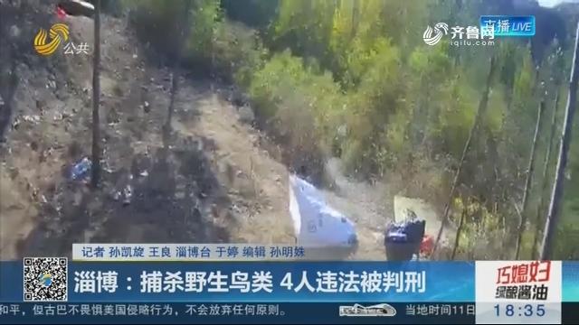 淄博:捕杀野生鸟类 4人违法被判刑