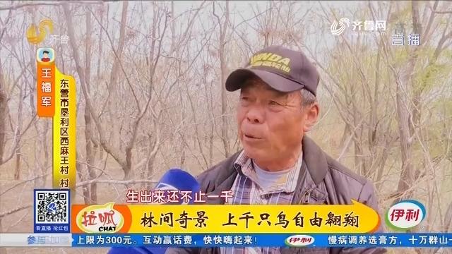 东营:林间奇景 上千只鸟自由翱翔
