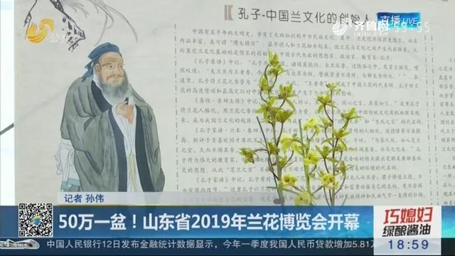 50万一盆!山东省2019年兰花博览会开幕